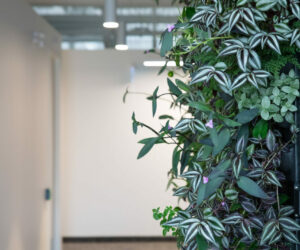 Living wall, indoor plants and flowers in an office